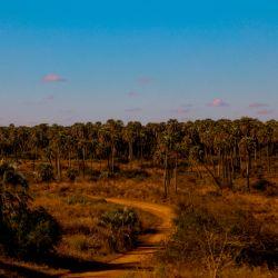 Parque Nacional El Palmar - Palmeras de Yatay