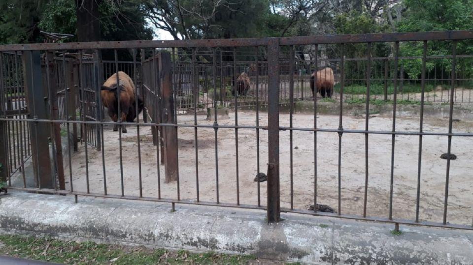 El recinto de los bisontes.