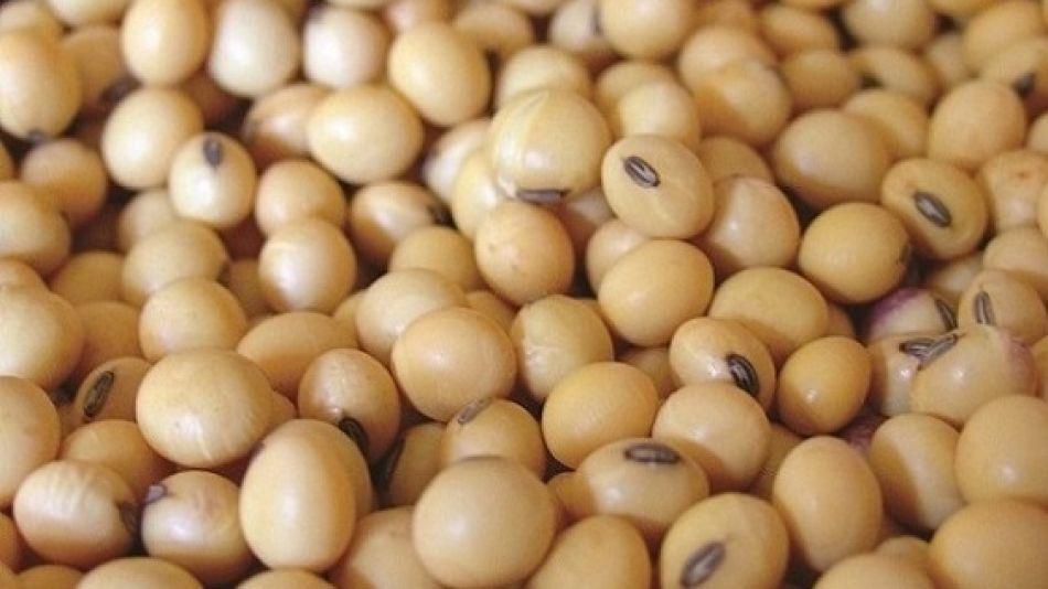 China dejó de comprar soja a EEUU y la habría reemplazado por suministros brasileros.