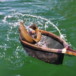 Detalle de los ámbitos patagónicos en los que está permitida la pesca de truchas.