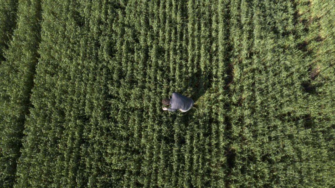 Federico Zerboni checks wheat crops at his farm in San Antonio de Areco, Buenos Aires province.