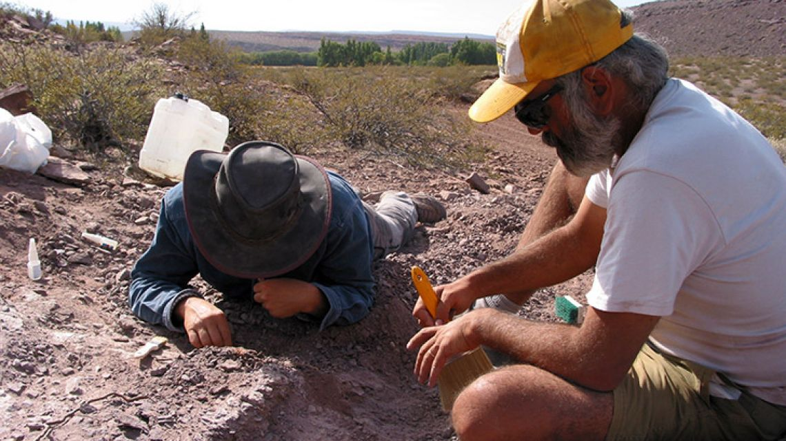 Handout picture released by Agencia CTyS (Science, Technology and Society divulgation agency) on November 2, 2018, showing investigators working on the extraction of the remains of three dinosaurs in the Argentine province of Neuquén. A team of Spanish and Argentine paleontologists found the remains of three specimens of a new species of dinosaur with an antiquity of 110 million years.