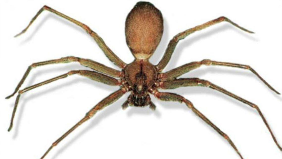 Razones para no matar a las arañas de tu casa