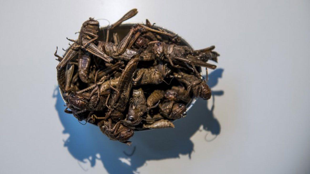 """El """"Nsenene"""", un snack bar de Uganda, se presenta en el Disgusting Food Museum el 7 de noviembre de 2018 en Malmo, Suecia."""