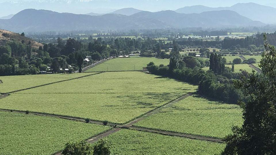 Impactante. Los viñedos de Vik Chile, un destino exclusivo del otro lado de la Cordillera.