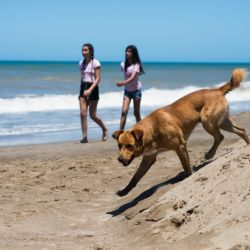 mariodefina-revista-noticias-29-12-2018-perros-playa-1-1