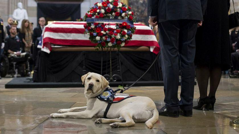 Foto del perro de Bush junto a su ataúd conmueve a todos