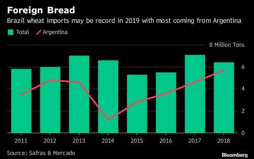 Brasil, potencia mundial en cultivos, quiere más trigo argentino