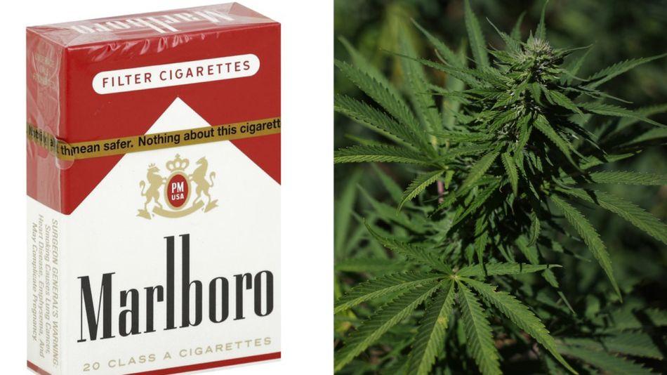 Cannabis Malboro 12072018