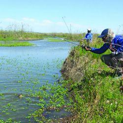 Si bien no alcanzaron los portes esperados, las tarariras se están convirtiendo en la vedette de las especies de río.