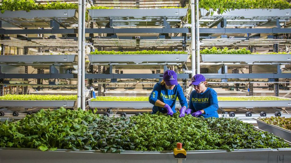 Bloomberg agricultura urbana