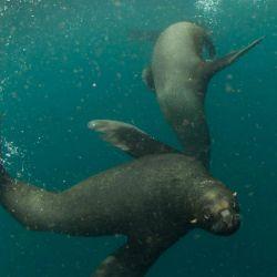 El proyecto Pristine Seas realizó diferentes expediciones para estudiar y documentar los ecosistemas de dos nuevas áreas marinas protegidas.