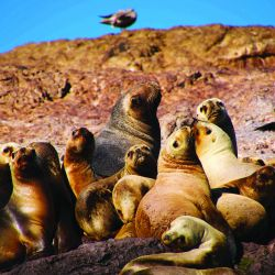En esta localidad de Santa Cruz el pasado convive con un marco natural siempre activo, donde los pingüinos se llevan todos los flashes.