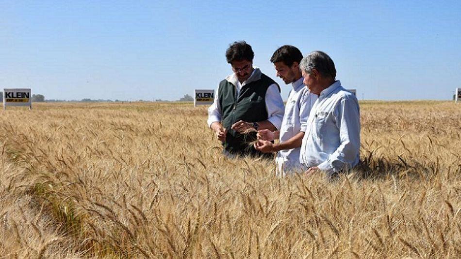 DATO. Se espera una producción de más de 9,1 millones de toneladas, con un precio del trigo por encima de los U$200.