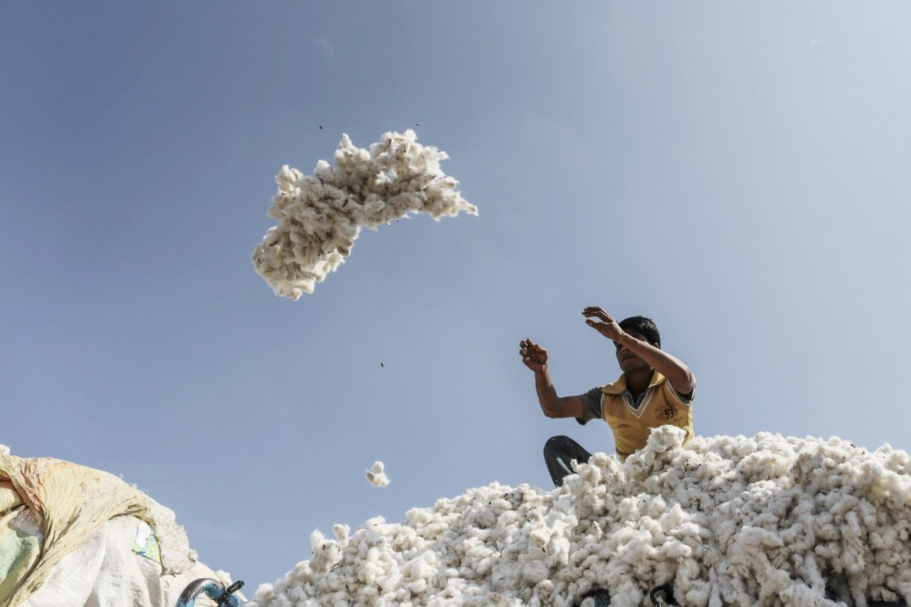 Monsanto Wins Legal Battle for Patent on Cotton Seeds in India