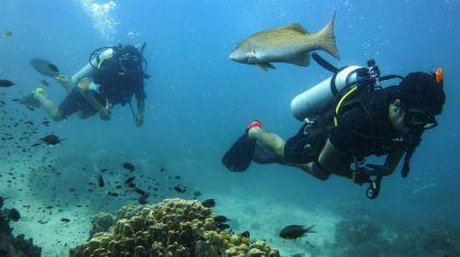 pura vida diving 09012019