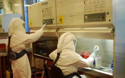 Científicos buscan desarrollar antisuero contra el hantavirus