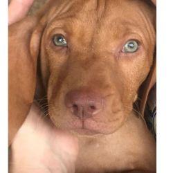 Beto, nuevo perrito de Susana