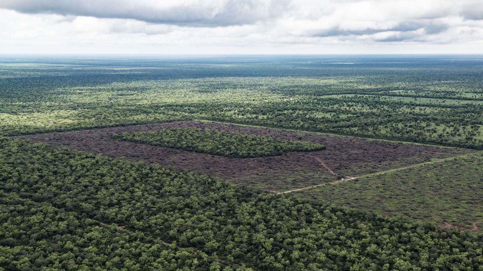 deforestacion chaco 30012019