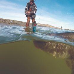 Pescar con spinning en el Sur es posible y se lo disfruta. Jurassic Lake, sobre el lago Strobel,          Santa Cruz, es meca para los que buscan grandes trofeos de arco iris.