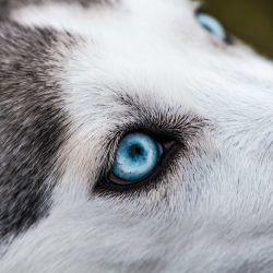 Estudios científicos lo confirman: los canes son conscientes de que si no saben algo, tienen  que averiguarlo. ¡Guau!