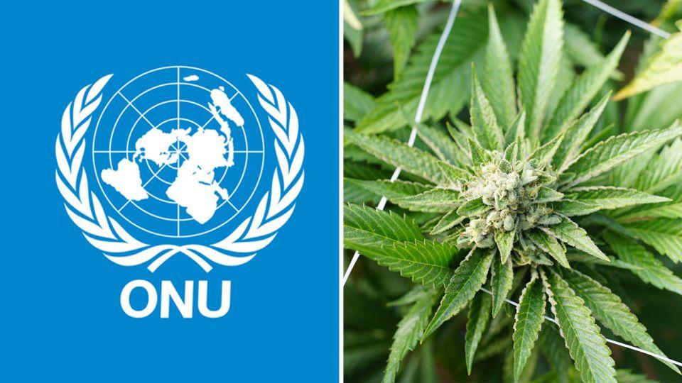 ONU Y CANABIS 20190212