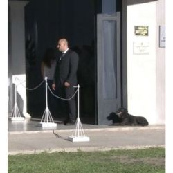 Nala, la fiel perra de Emiliano Sala