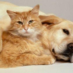 Nuevos estudios demuestran que las mascotas también son buenas para la sociedad en su conjunto.