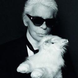 Choupette Lagerfeld.