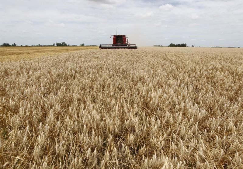 Indonesia reservo cerca de 1 millón de toneladas de trigo argentino para la nueva temporada.