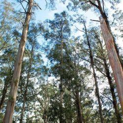 Según un estudio, los árboles sudan a altas temperaturas, dejando de consumir carbono.