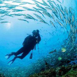 El archipiélago cuenta con una fauna submarina muy variada.