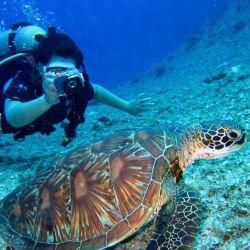 El buceo nos da la oportunidad de acercarnos a la fauna marina.