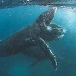 Nuestro planeta invita a conocer las maravillas de las profundidades.