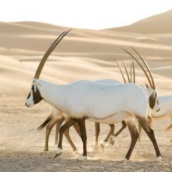 La serie muestra los diferentes hábitats que existen en todo el mundo.