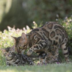 Le Zampe Katze