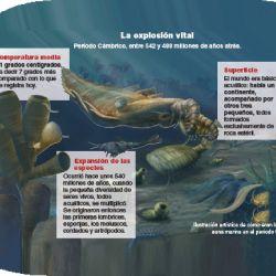 fosiles-los-origenes-de-la-vida-2