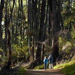 Bariloche incluye recorridos de trekking y senderismo por lagos y bosques.