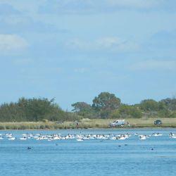 Los Horcones alberga variedad de aves migratorias.