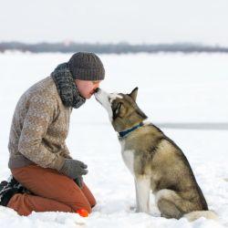 """El perro es conocido popularmente como """"el mejor amigo del hombre""""."""