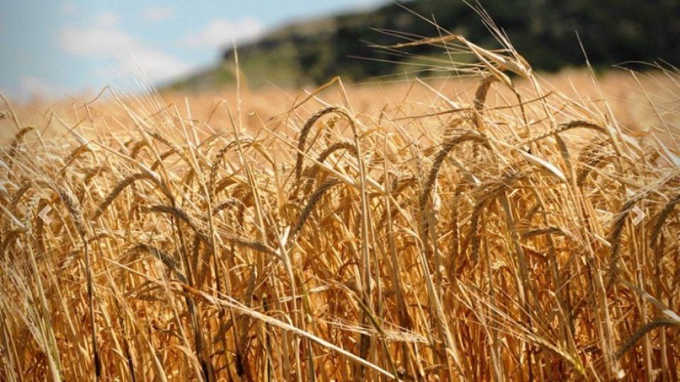 La puja comercial está produciendo una gran volatilidad y desajustando la relación entre el mercado de Chicago con nuestros productos cerealeros en la región.