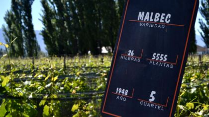 Malbec-15042019-01