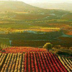 En Rioja los visitantes pueden aprender a catar, visitar viñedos, conocer museos y recorrer bodegas.