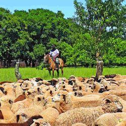 Otra de las propuestas de Misiones es participar de tareas rurales.