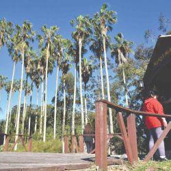 Camping bajo las palmeras en Rocha, Uruguay.