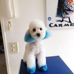 Carmen Barbieri acusada de maltratadora de animales.