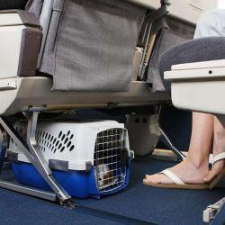 En general, el peso máximo para que una mascota viaje en cabina es de 10 kg.