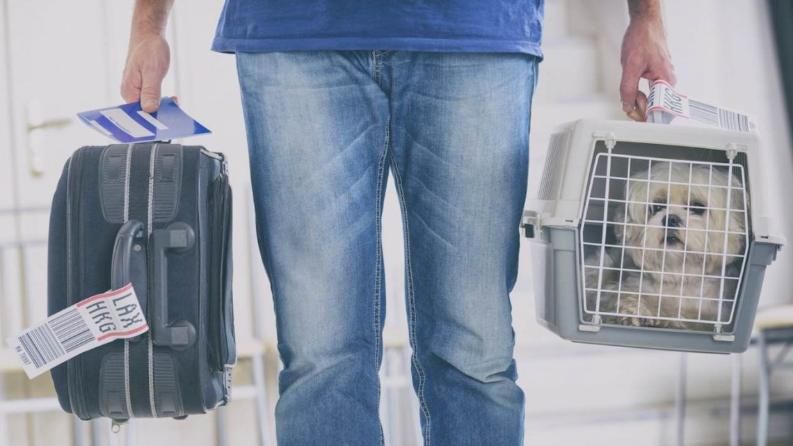 Weekend | 6 tips para viajar con tu mascota en avión