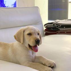 mauro icardi, mascota, isabella icardi, wanda nara, francesca icardi, perros