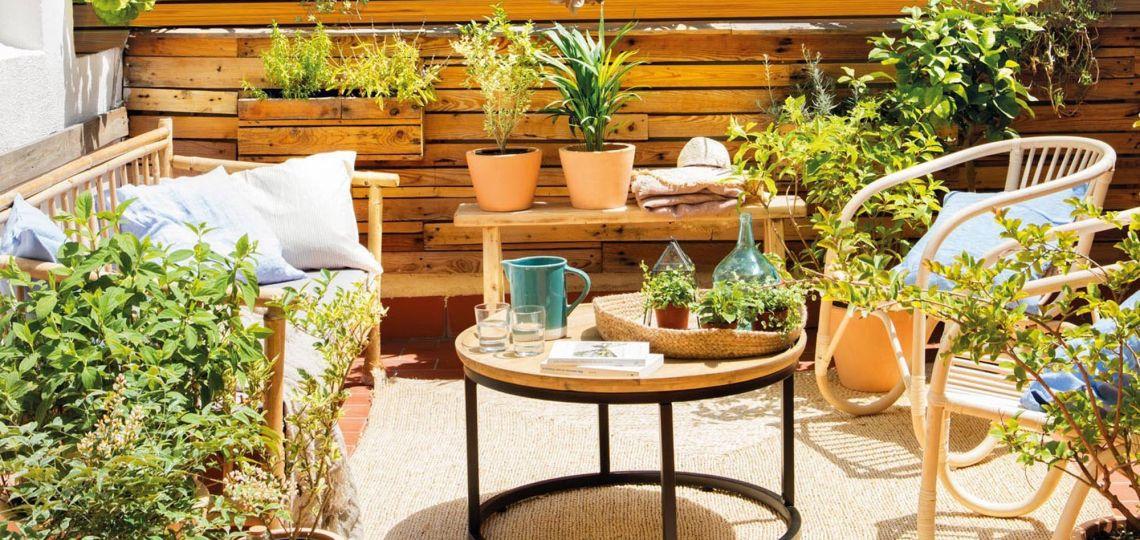 Tips para cuidar tus plantas en la Ciudad